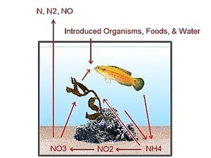 Nitrogen cycle simplified illustration of the nitrogen cycle ccuart Gallery