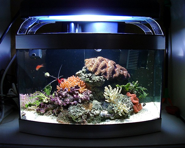 Best fish nano tank remove the tomini tang from this for Best fish for nano tank